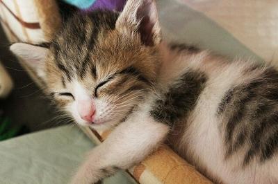 とき 寝る 腰痛 コルセット