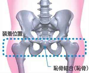 骨盤ベルトの巻き方